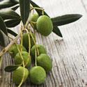 olivsm